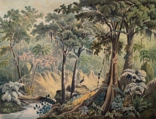 Virgin Forest at Manqueritipa, province of Rio de Janeiro (after Rugendas) - Wilhelm Friedrich Ludwig Freiherr von König-Warthausen